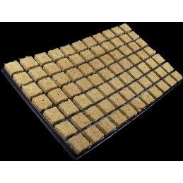 Cultilène clone tray 77, 53 x 31cm