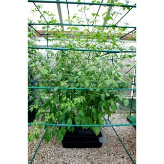 Nutriculture Amazon System 8 Plants Aeroponic Cultivation System