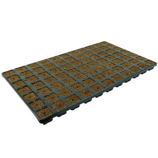 Eazy Plug 77 propagation tray