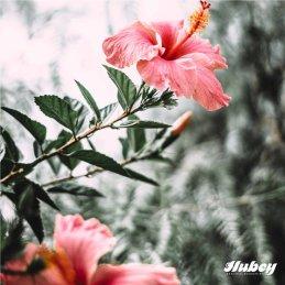 Hubey Bat-Guano 2 kg Pulver 100% Fledermausdünger - Fledermauskot