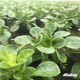 hubey® worm humus, 10 liters worm manure