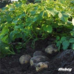 Hubey Geflügeldung 3 Kilo biologischer Naturdünger Universaldünger und Bodenverbesserer